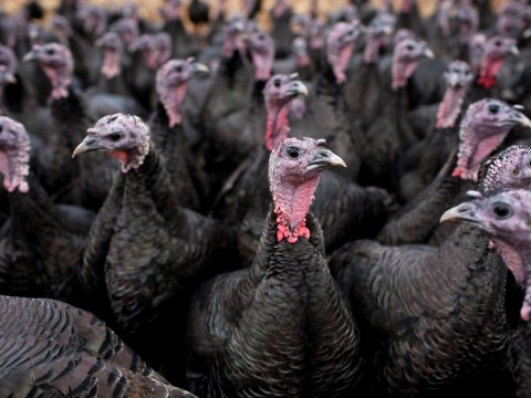 Angry turkeys are reason some people aren't getting their post