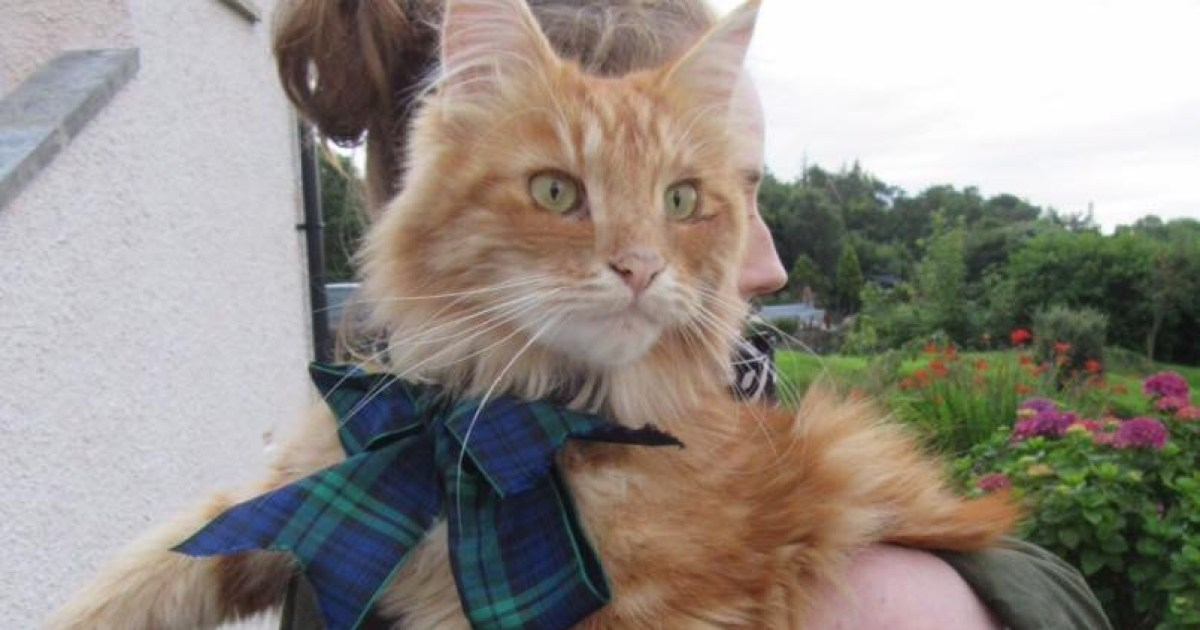 Bow down to Parsley, the cat making his fans travel to Oban just to see him