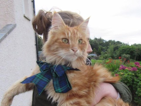 Bow down to Parsley, the cat that's making his fans travel to the seaside town of Oban just to see him