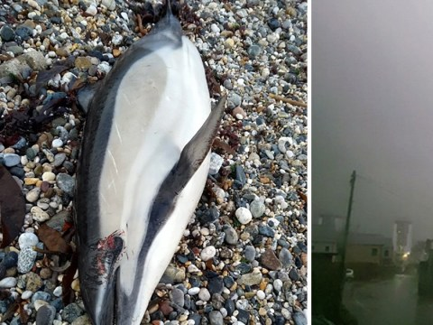 Freak electrical storm 'kills hundreds of fish in Cornwall'