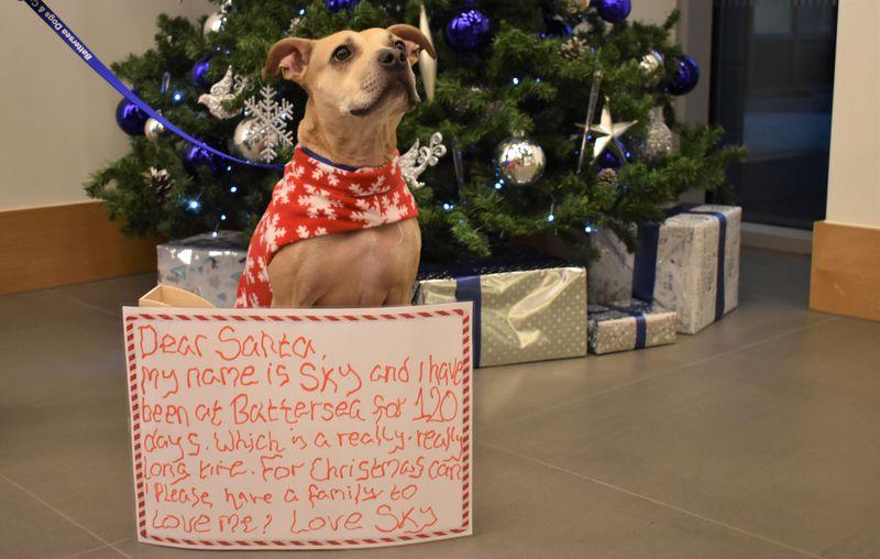 Britain's loneliest pets write letters to Santa