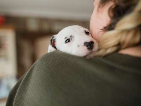 Study shows we'd rather hang out with our pets than with our pals