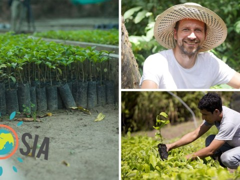 This new search engine will plant a tree every time you use it