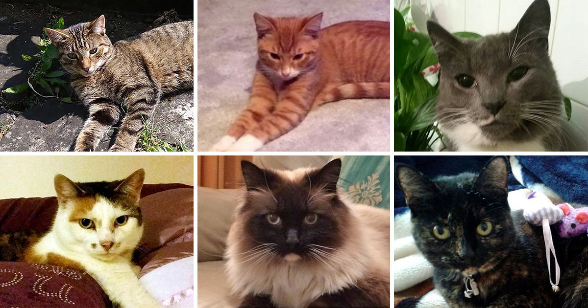 Do you recognise the Croydon cat killer's route over Christmas?