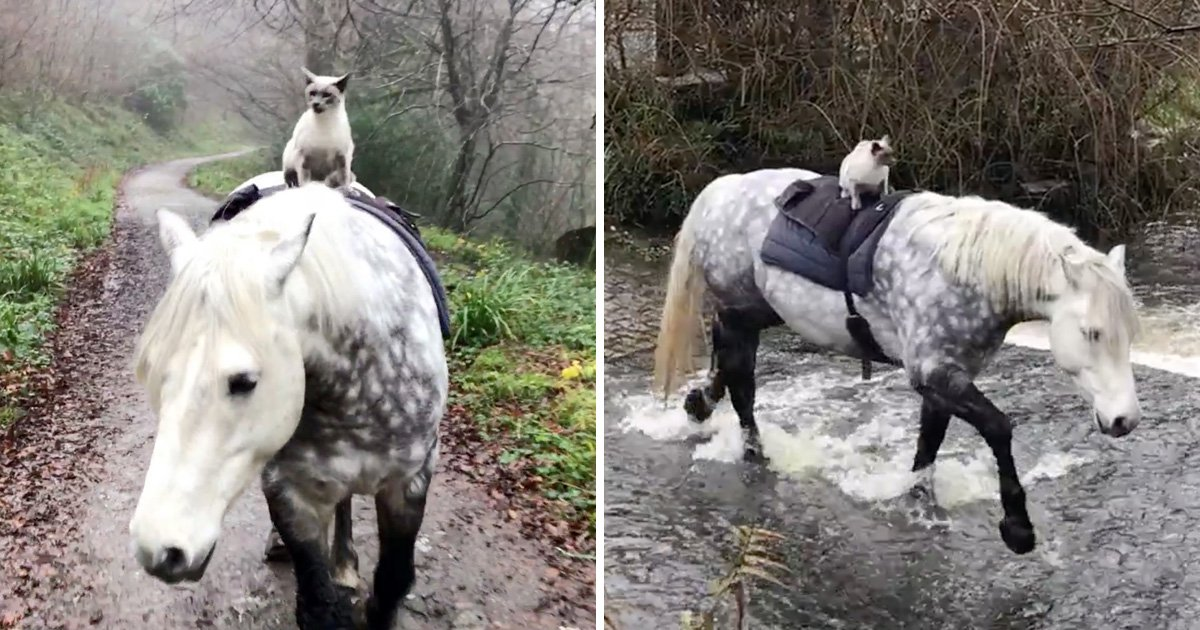Cat casually goes for a trot on the back of a horse