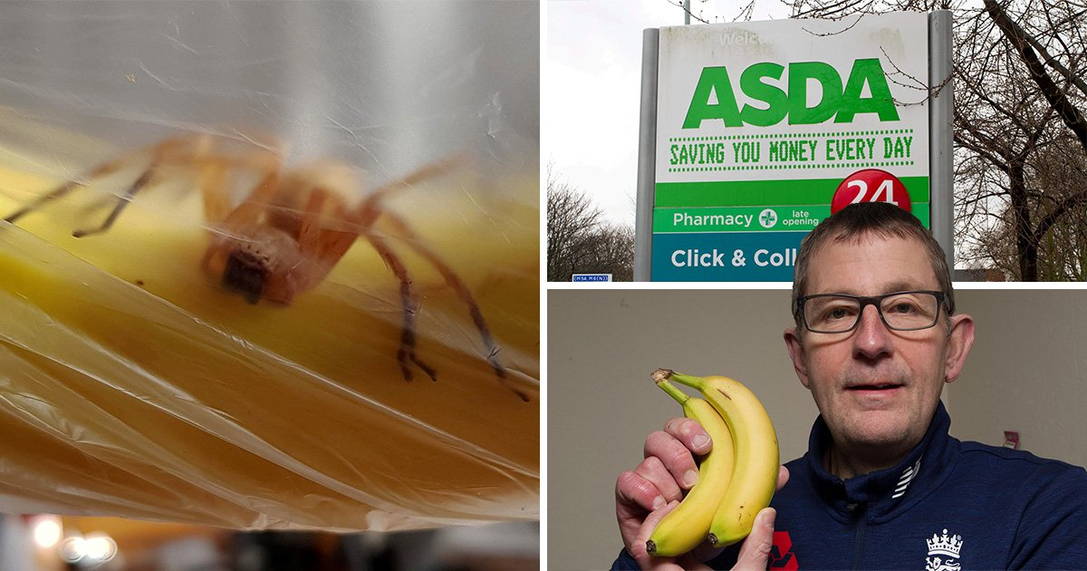 Deadly spider found in bunch of Asda bananas after flying 5,000 miles from Brazil