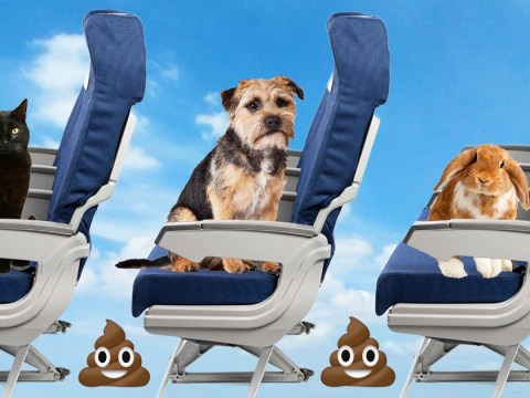 Airline tightens up pet rules after excessive pooping on planes