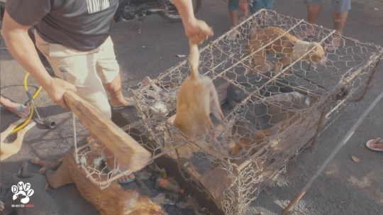 Horrific video shows dogs slaughtered in street then sold