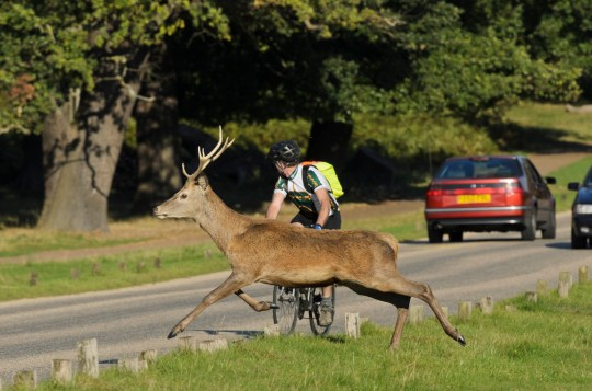 Would you dare live off a roadkill diet? | Metro News