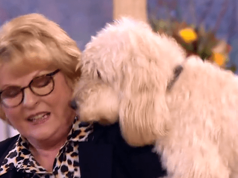 This is why you shouldn't work animals on live TV as Vera star gets humped by over-excited dog