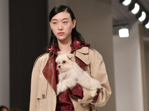 Models walked the Tod's runway with puppies at Milan Fashion Week