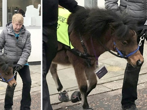 Blind man with fear of dogs to get helpful and small 'guide horse'