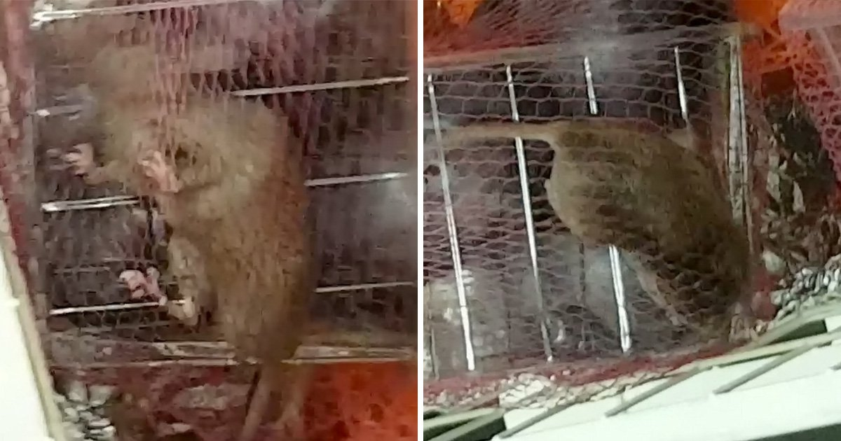 Couple find rat staring back at them in sealed packet of Aldi plums