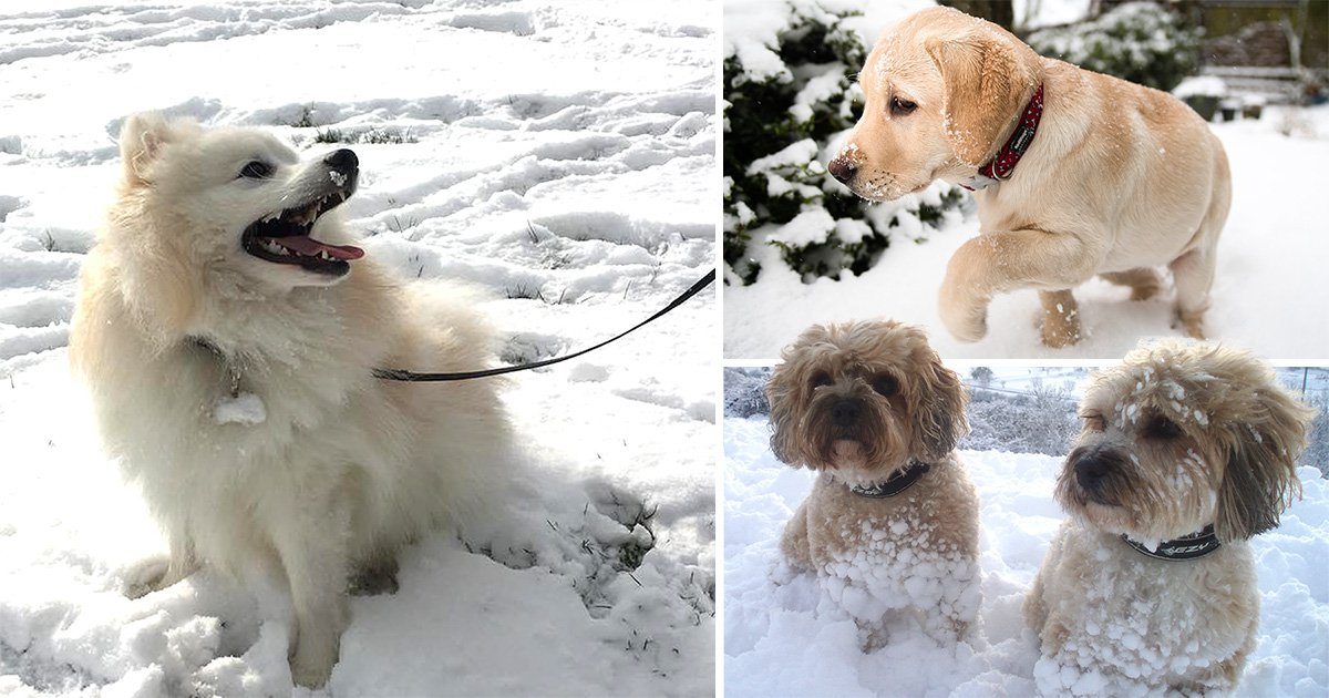 We can't get enough of these adorable dogs playing in the snow
