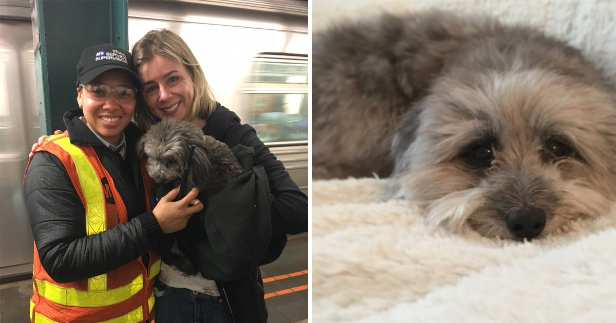 This tale of a dog who got lost on the subway tracks will have pet owners weeping