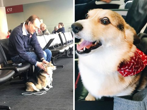 Corgi who can feel others' pain comforts stranger whose dog had died