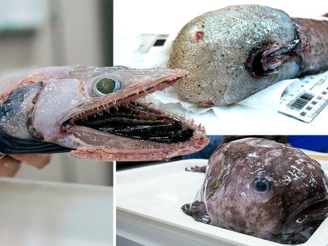 Scientists drudge up 42,000 really ugly fish from the deep sea