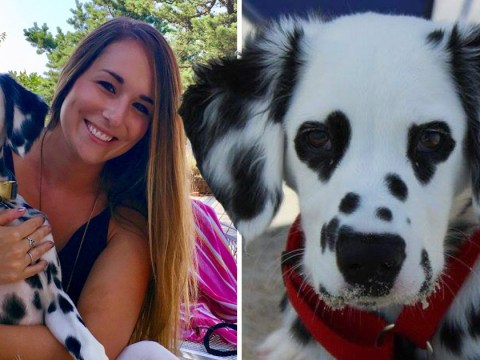 Meet Charlie, the Dalmatian with hearts for eyes