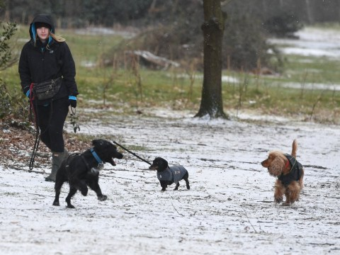 Dogs are enjoying the snow in Britain way more than humans