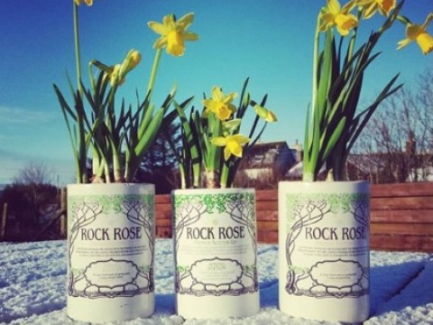 7 of the best gins to drink during spring and the Easter holidays