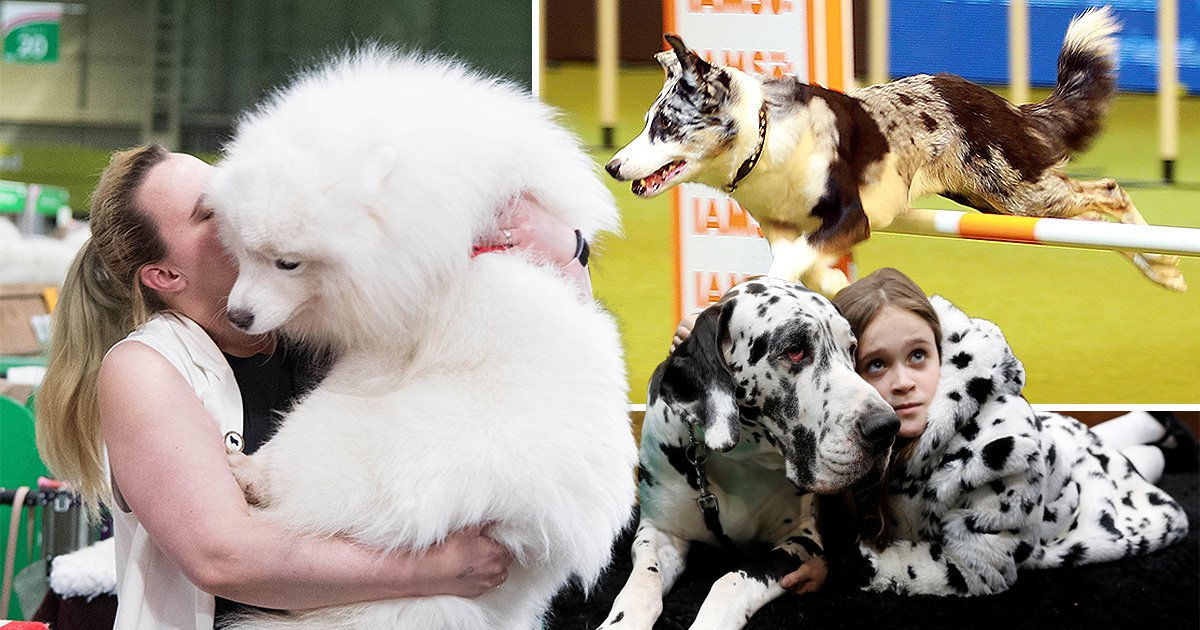 All of the cute dogs you need to see from this year's Crufts