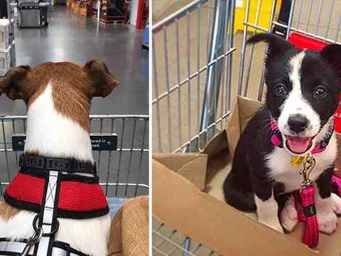 Dogs in shopping trolleys is our new favourite thing