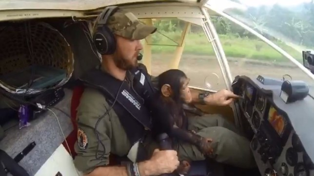 METRO GRAB - Lwiro Primates Facebook no permission Baby chimpanzee co-pilots plane Facebook/Lwiro Primates