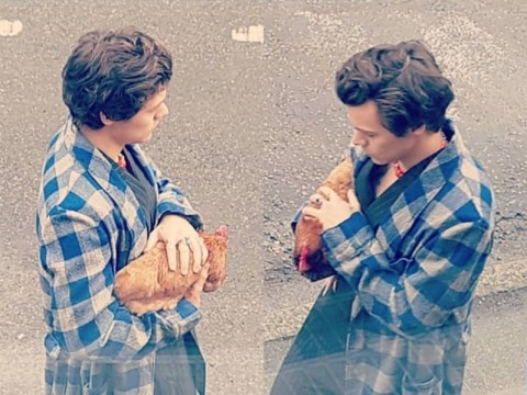 Harry Styles gives zero clucks as he cuddles a chicken for new Gucci ad