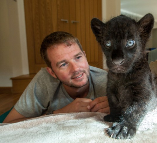 Maya the baby jaguar stole everybody's hearts in Big Cats