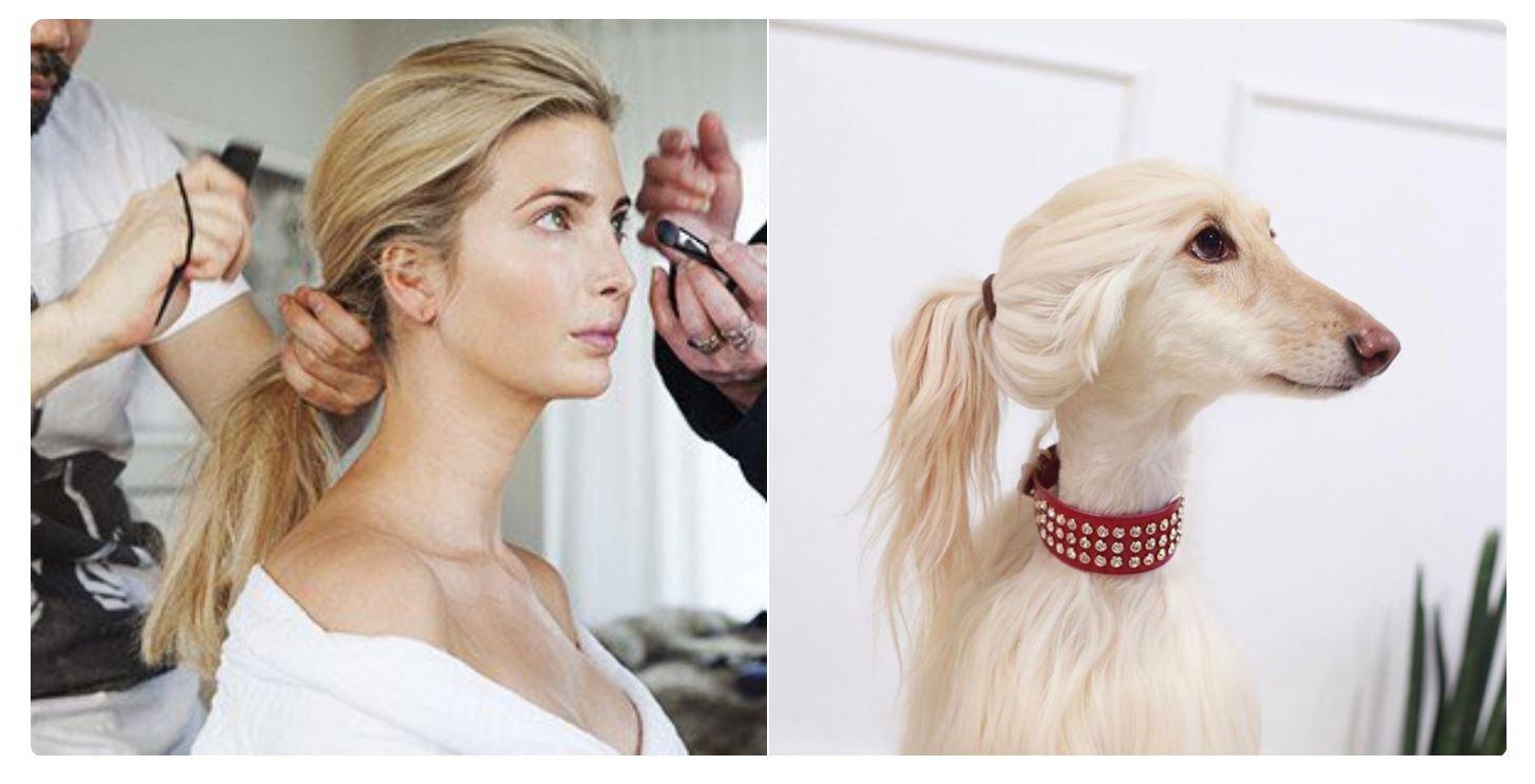 Picture: Twitter/ goldenpolaroid Cruel tweeters say dog looks like Ivanka Trump