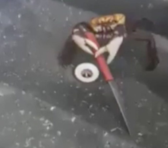 Crabs are wielding knives now and we're worried for humanity