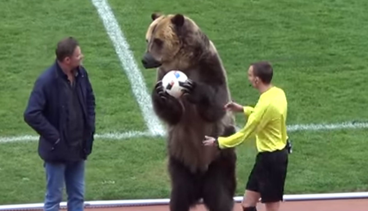 Bear forced to hand match ball to referee in Russia ahead of World Cup