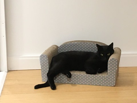 People are sharing photos of their pets lounging on tiny furniture and it's magical