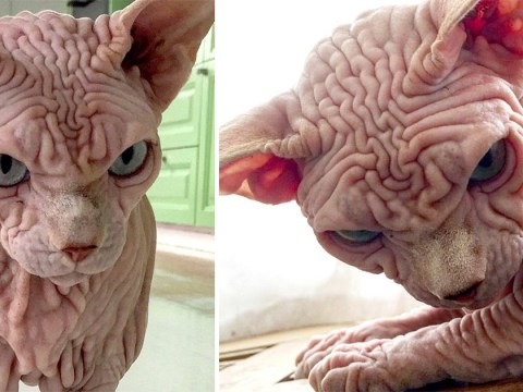 Freaky cat looks like it's very angry