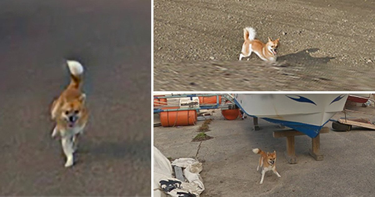 Please enjoy this evidence of a tiny dog chasing the Google Street View car