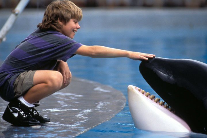 what type of animal is free willy
