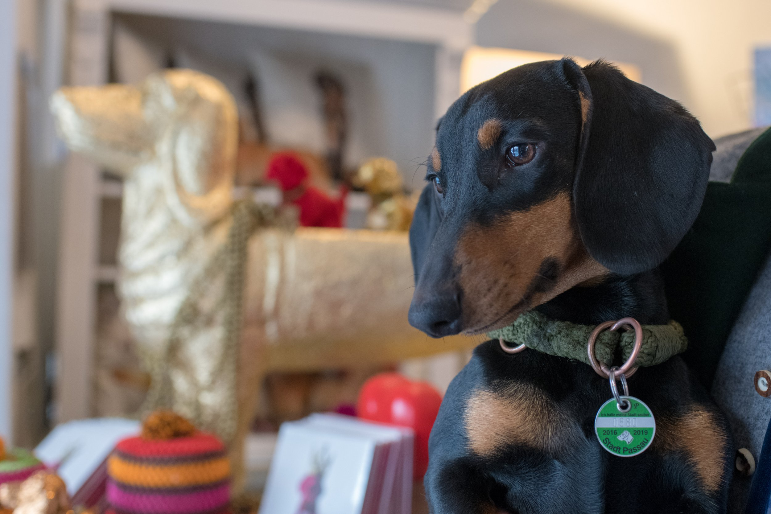 Well hot dog, there's now a sausage dog museum