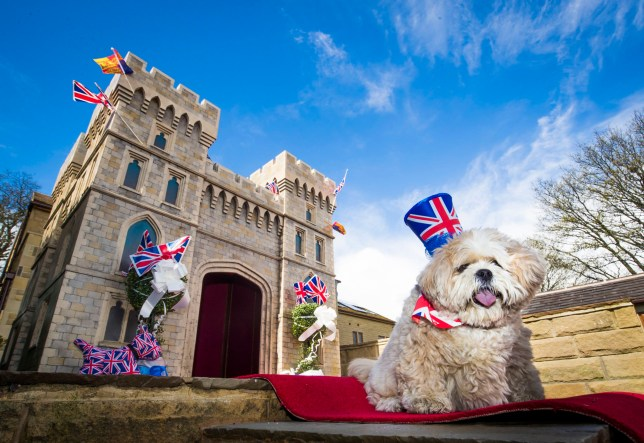 Archie the Lhasa Apso and his new kennel, a replica of Windsor Castle, which his owner Susan Crossland has installed at her home in Mirfield, West Yorkshire. PRESS ASSOCIATION Photo. Picture date: Wednesday April 25, 2018. A dog-loving Lottery winner has commissioned a replica of Windsor Castle, complete with red carpet, throne and hot tub, so her pampered pooch can enjoy the royal wedding as much as her. Susan Crossland, 53, has spent more than ?5,000 having a 2m high, hand-painted version of the castle built for 10-year-old Archie. See PA story ROYAL Dog. Photo credit should read: Danny Lawson/PA Wire