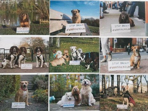 Dogs are taking over the anti-Brexit campaign with Wooferendum posters