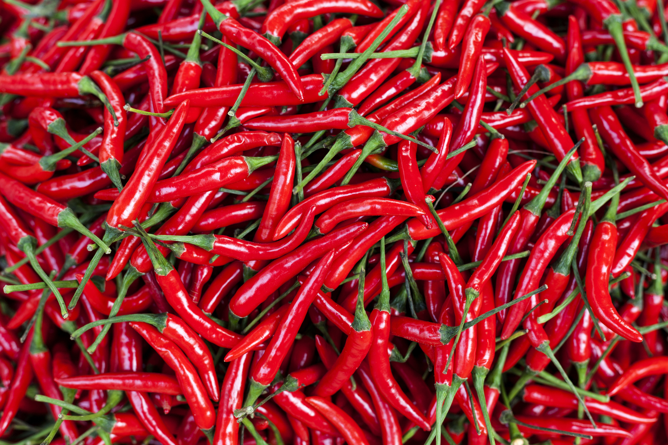 The chili pepper is the fruit of plants from the genus Capsicum, members of the nightshade family, Solanaceae. The substances that give chili peppers their intensity when ingested or applied topically are capsaicin (8 - methyl - N - vanillyl - 6 - nonenamide) and several related chemicals, collectively called capsaicinoids.