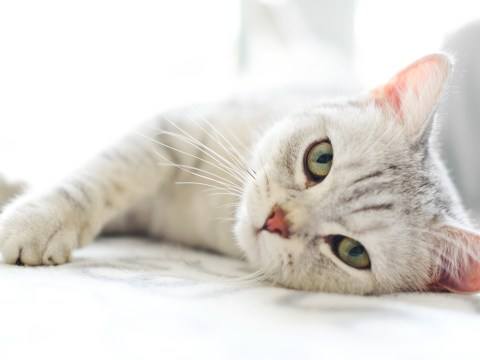4 common illnesses that could be making your cat sick