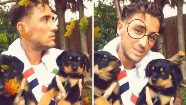 Stephen Bear courts controversy by bringing home two new puppies following accusations he 'killed' his last dog