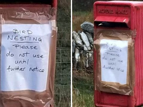 Family of birds have turned a Royal Mail postbox into their nest