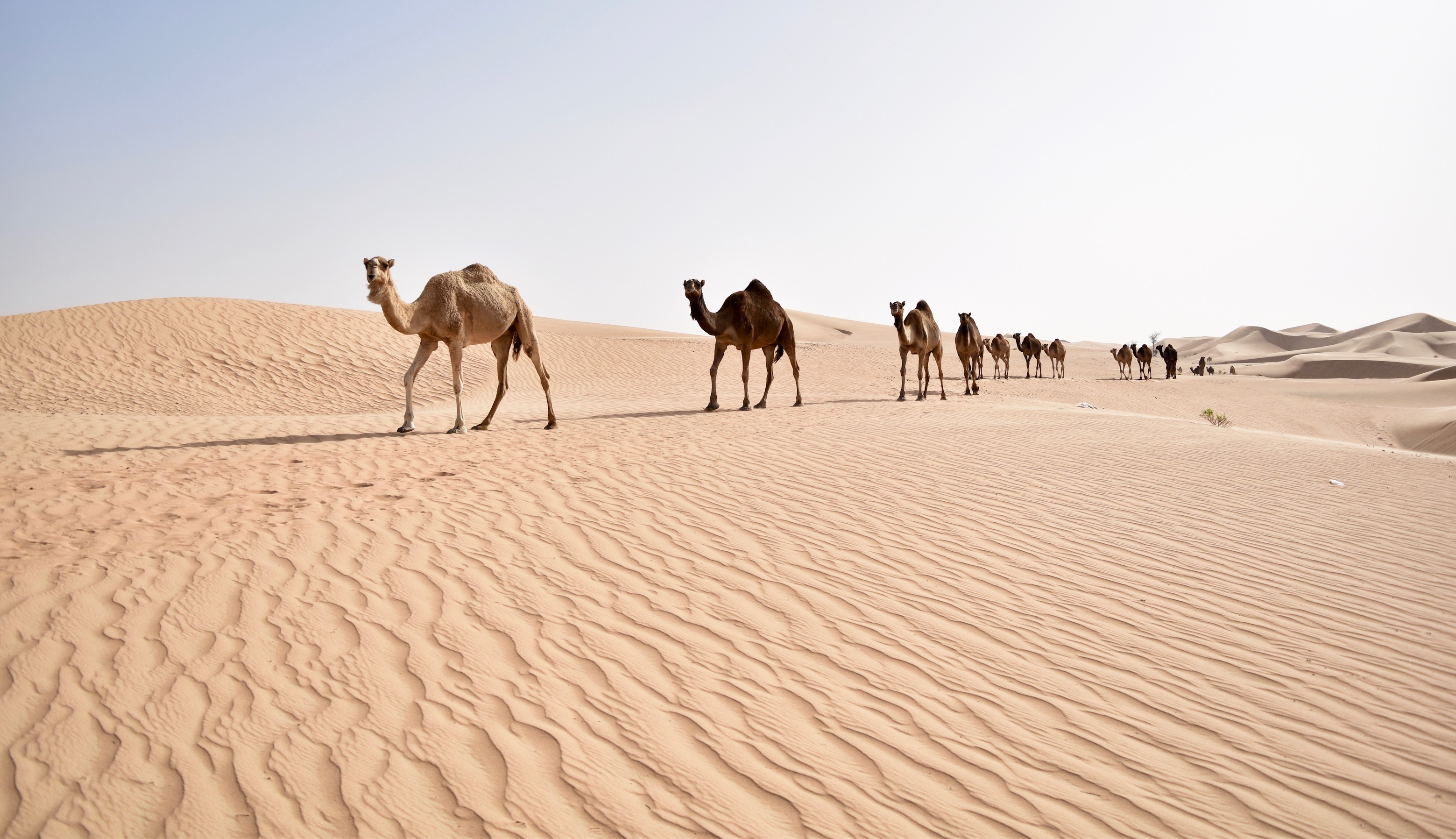 Camels, dune bashing and star gazing: How to get the most out of Abu Dhabi's desert