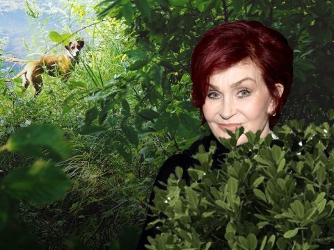 Sharon Osbourne pooed in her front garden and blamed it on the dog