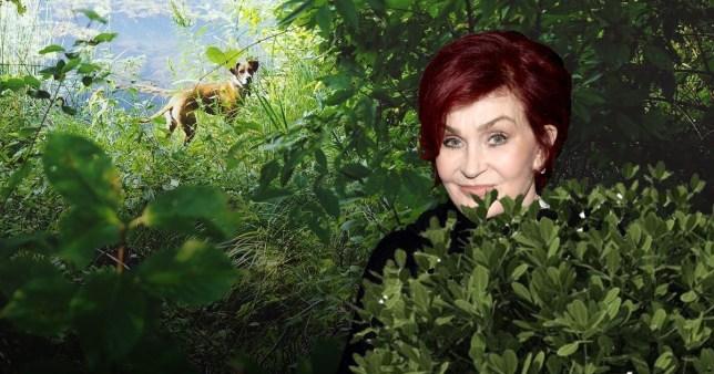 Sharon Osbourne pooed in garden and blame it on dog