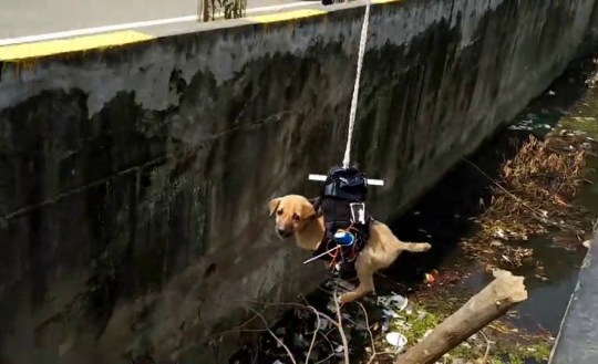 Cute puppy rescued by robot drone