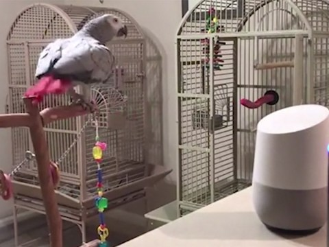 Parrot learns to use Amazon's Alexa to switch lights on and off