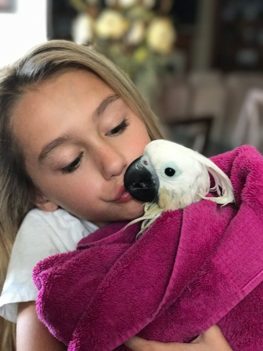PIC FROM Kennedy News and Media (PICTURED: KYLEE BOBBITT AND HER COCKATOO PENELOPE) A little girl captured the moment her tooth was removed - by her pet COCKATOO. Parrot-obsessed Kylee Bobbitt spent years begging her parents to let her have a cockatoo and saved up half of the $2,000 herself. The 11-year-old now has an unbreakable bond with her beloved bird Penelope, who lives in a cage in her bedroom and has taught her to hang off her finger, give kisses and even hold a pencil. SEE KENNEDY NEWS COPY