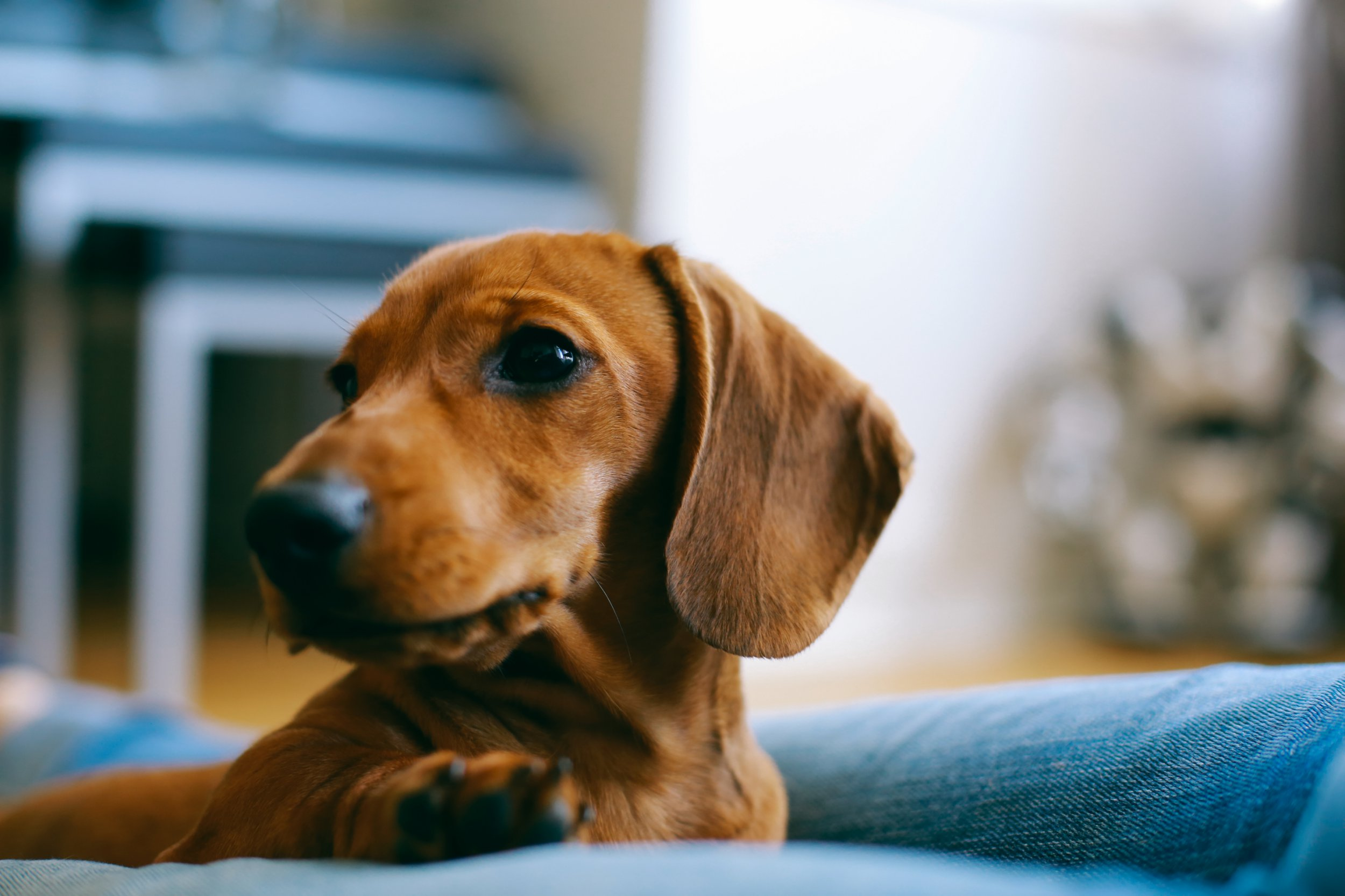 Can I keep a dog in a flat?